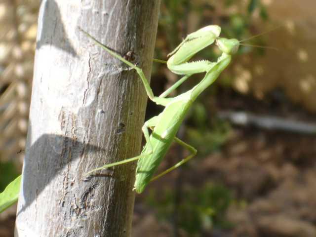Diversen fotos bezoekers de groene krekelachtige altavistaventures Images